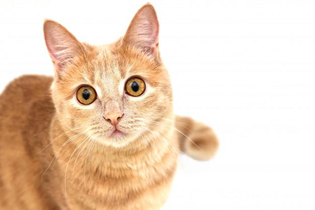 เครื่องดูดฝุ่นขนแมว